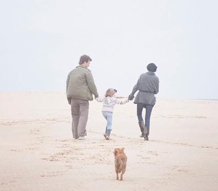 家族の遺伝子